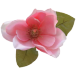http://www.magnolianetworks.net/wp-content/uploads/2017/06/cropped-magnolia-favicon.png